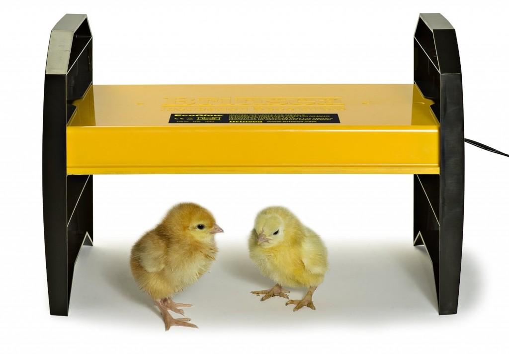 ecoglow chick brooder