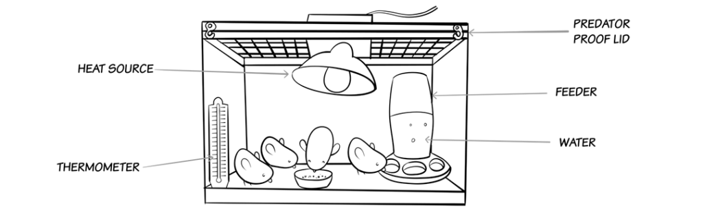 Chicken brooder diagram