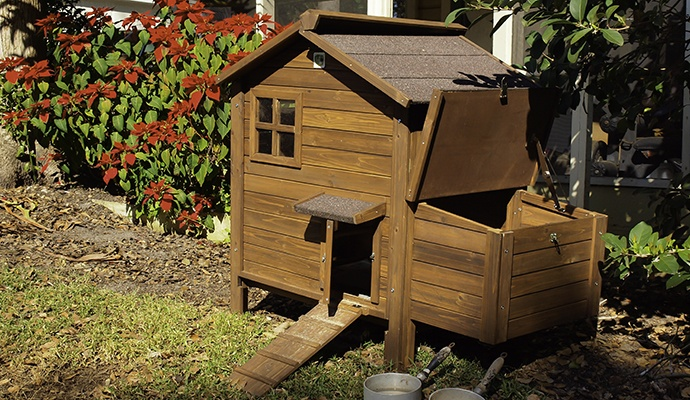 elevated chicken coop