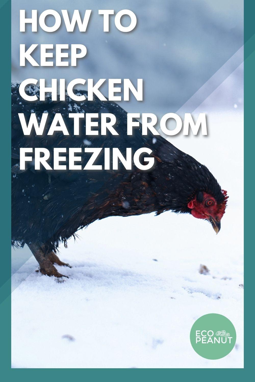 Chicken Snow