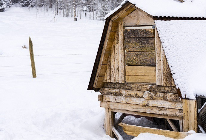 chicken-coop-in-winter-resized