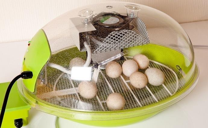 Incubate Eggs