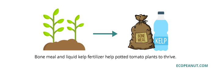 bone meal and kelp fertilizer help plants thrive graphic