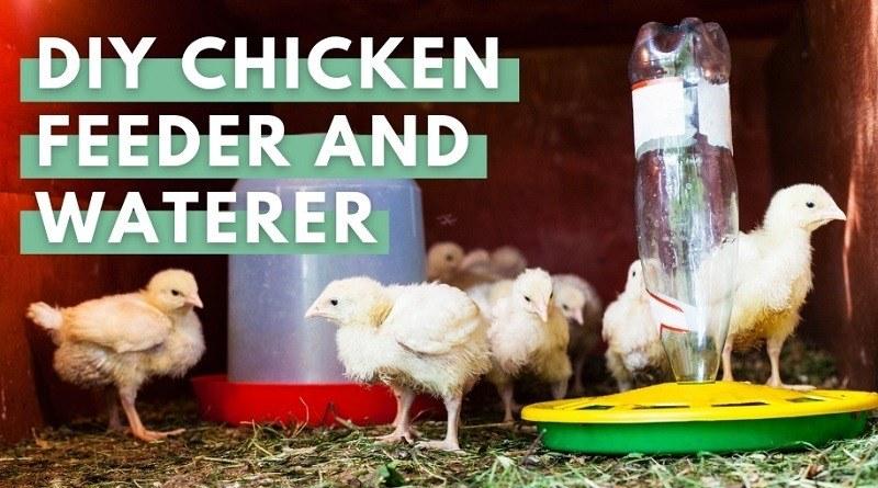 Chicken Waterer and Feeder