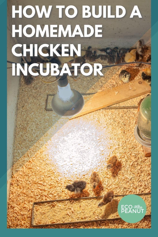 Chicken Incubator