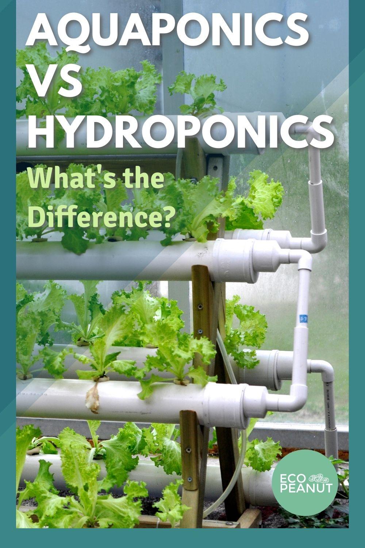 Aquaponics Hydroponics
