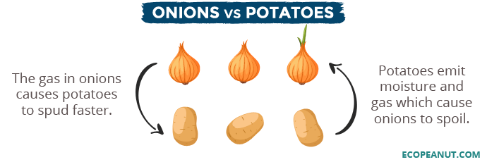 Onions vs potatoes