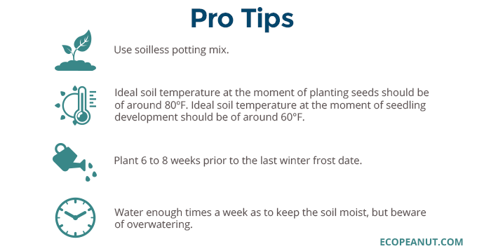 pro tips for broccoli planting