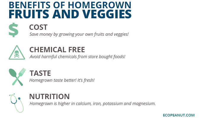 benefits of homegrown veggies and fruits graphic