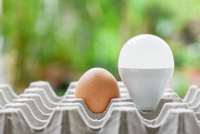 Effect Of Light On Egg Production