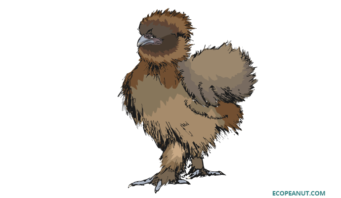Partridge Silkie Profile