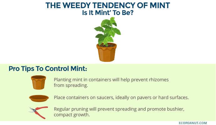 tips to control mint graphic
