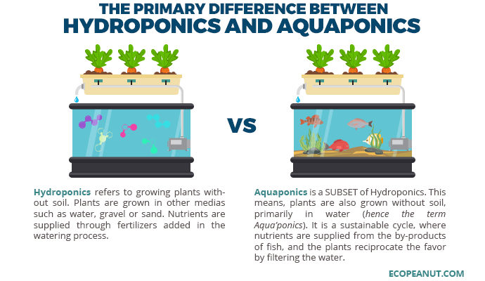 difference between hydroponics and aquaponics graphic