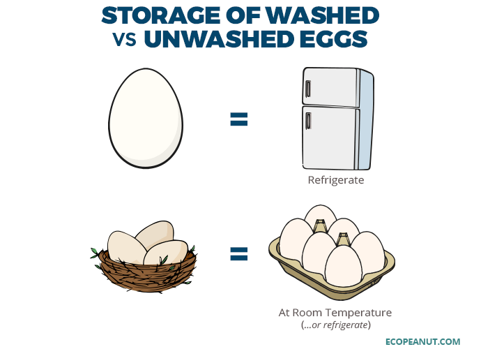 Storage of Washed vs. Unwashed Eggs
