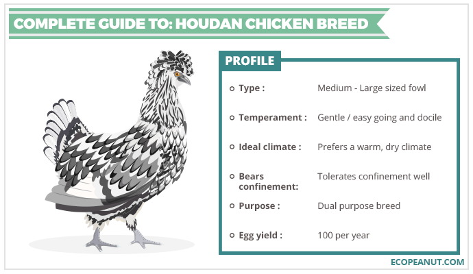 COMPLETE GUIDE TO HOUDAN CHICKEN BREED