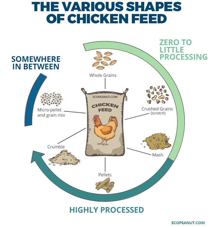 Chicken Feed What To Look For Cheap Feed Ultimate Guide Eco