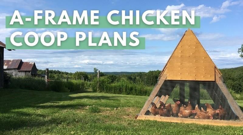 A Frame Chicken Coop