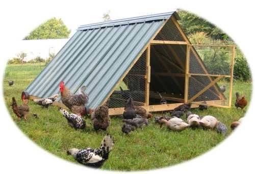 A-Frame Chicken Coop Plans Pasteur Shelter