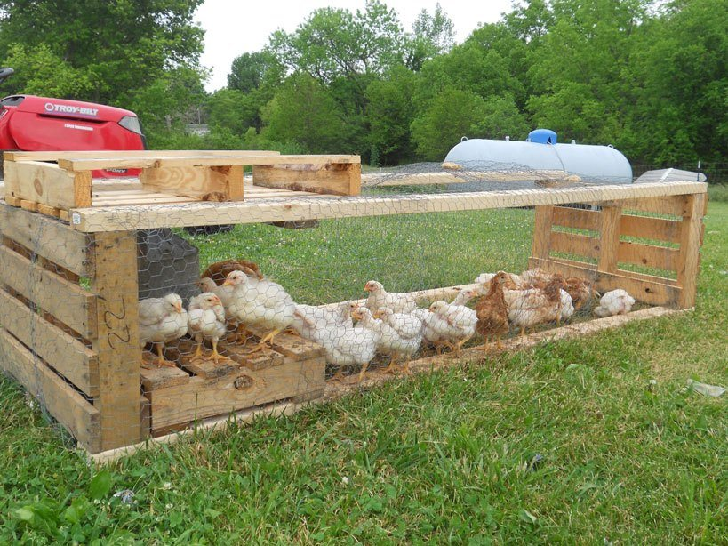 Pallet Coop Ideas Chicken Tractor