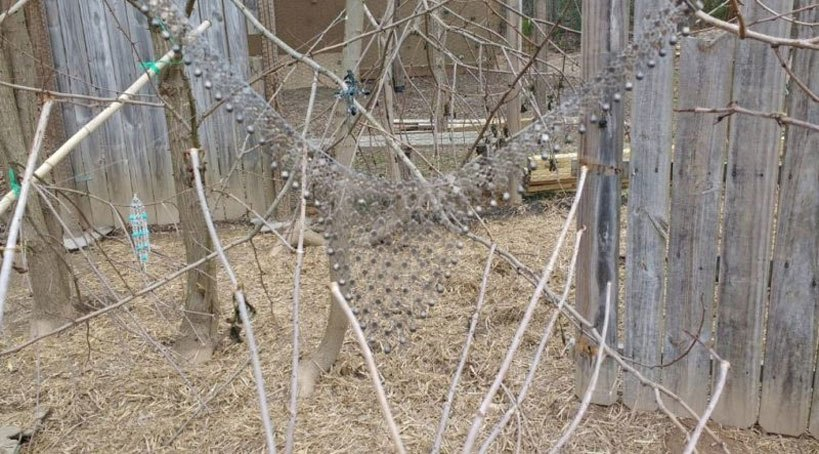 Predator Proof Your Chicken Coop Chicken Run Obstacle Course