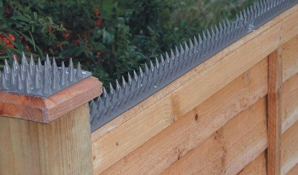 Predator Proof Your Chicken Coop Wall Spikes