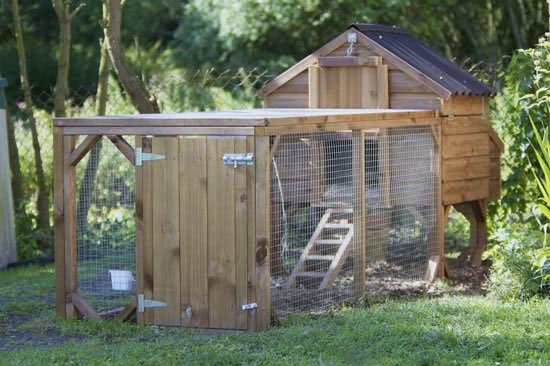 Predator Proof Your Chicken Coop Location