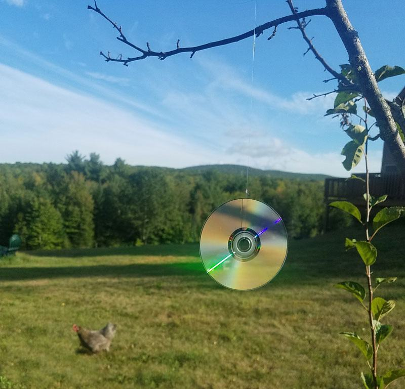 Predator Proof Your Chicken Coop CDs can save chickens