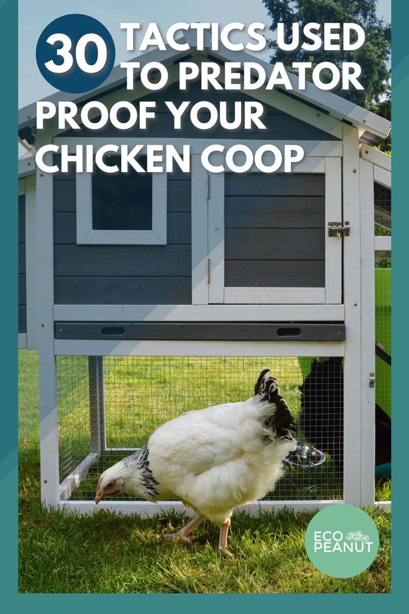 30 Tactics Used to Predator Proof Your Chicken Coop