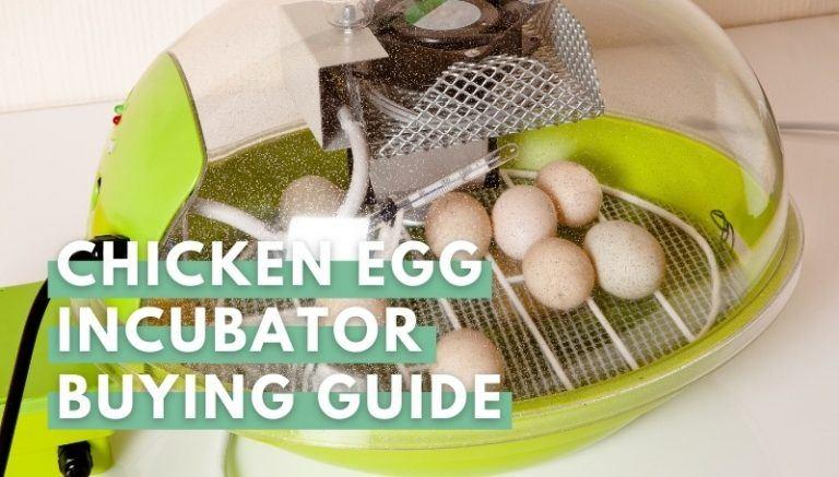 Chicken Egg Incubator