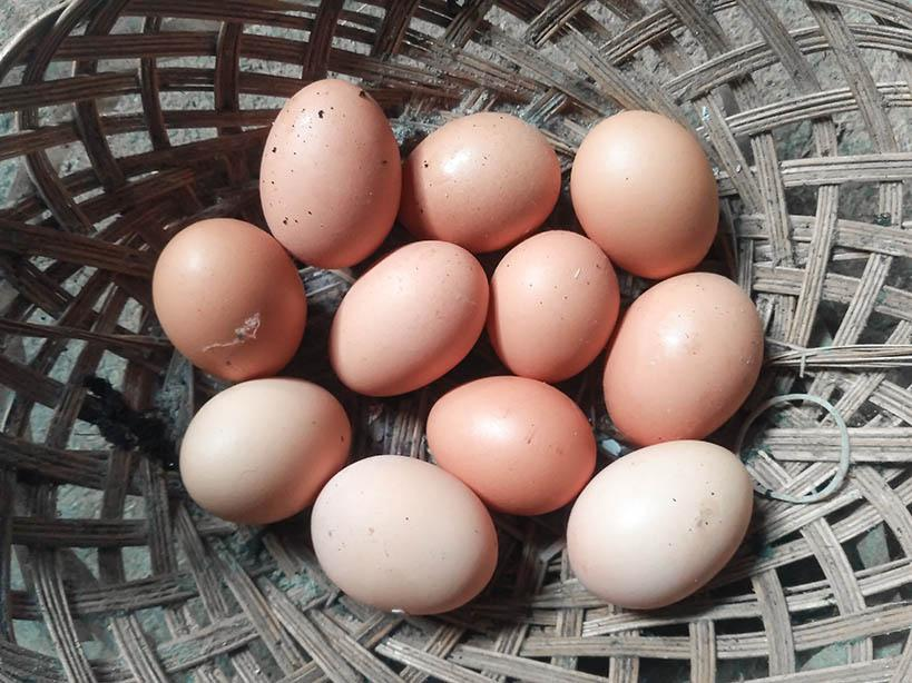 Cream and pink chicken eggs in a basket