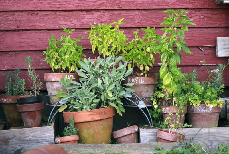 A herb garden with terracotta pots of basil, parsley, lavender, and more
