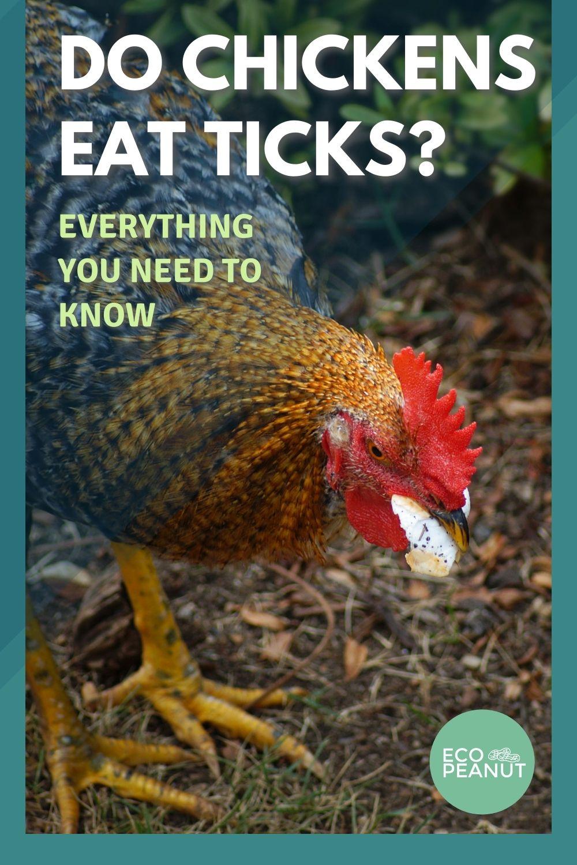 Chickens Eating Ticks Pinterest