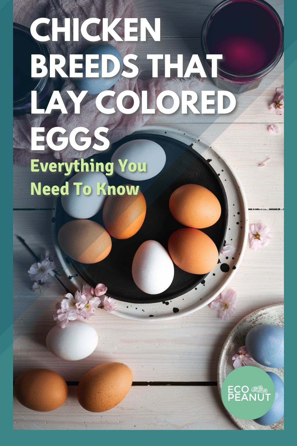 PInterest Chickens that lay colored eggs