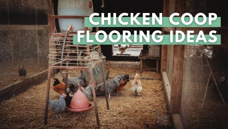 chicken coop flooring Ideas