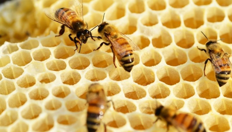 zoomed in view of bees on honeycomb in a wooden beehive box