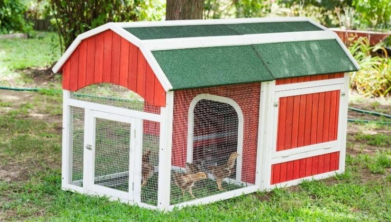 chicks walking around a chicken run attached to a red chicken coop