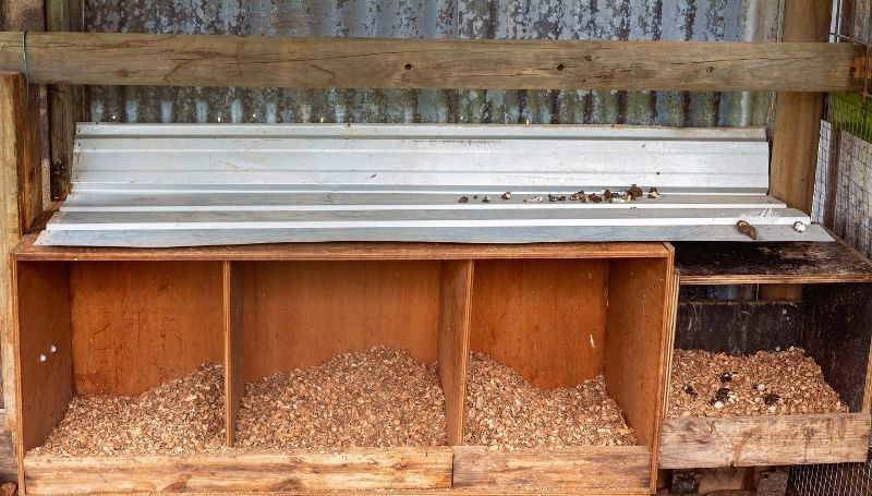 empty chicken nesting boxes with wood shavings