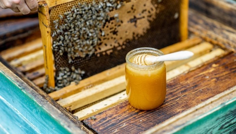 extracting honey from a frame of a wooden Golden hive