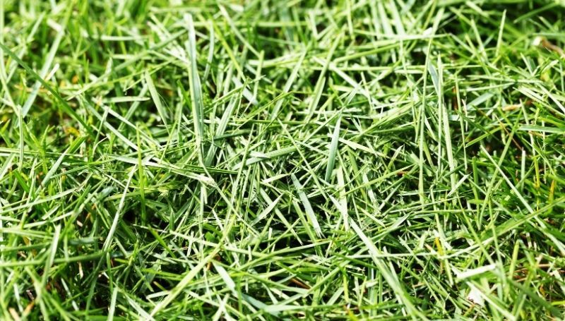 a zoomed in shot of grass clippings
