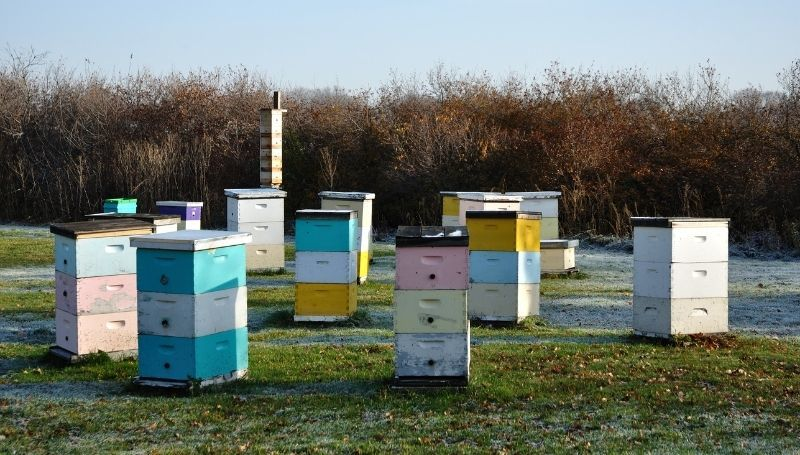 multiple colorful Langstroth Hives on an empty plot