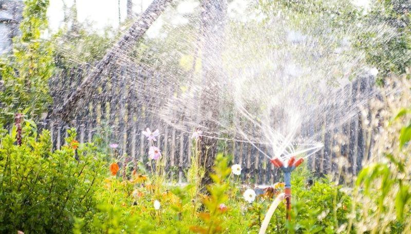 an activated motion sensor sprinkler in a garden
