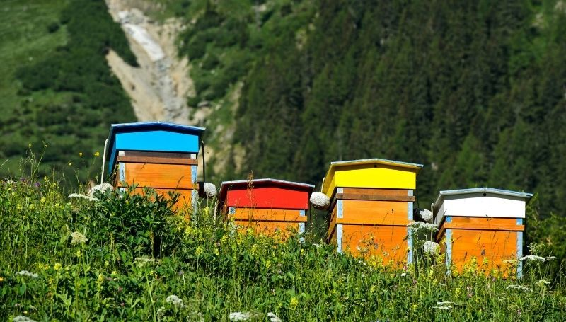 four colorful Warre hives on a hill
