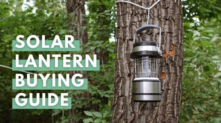 lantern on tree