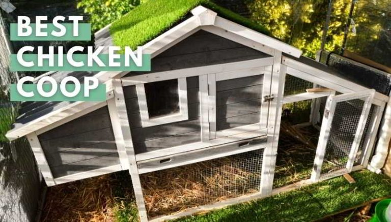 Best Chicken Coop: A Buying Guide