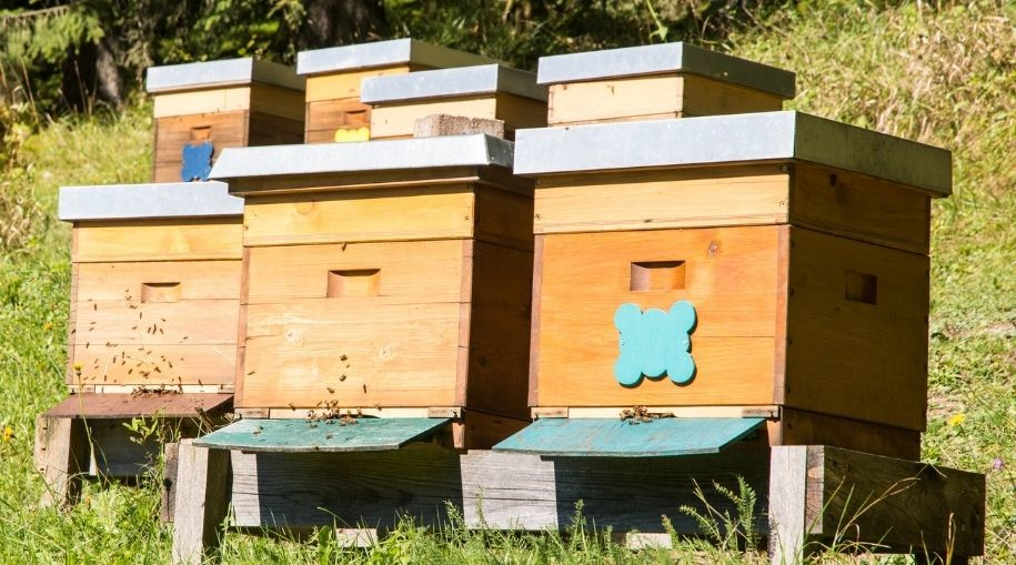 multiple 2-layer bee hive boxes on the hill