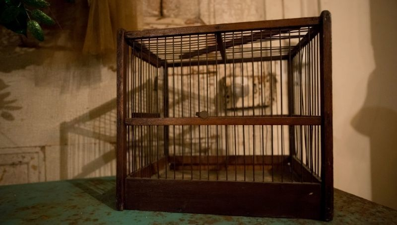a large brown bird crate on the floor