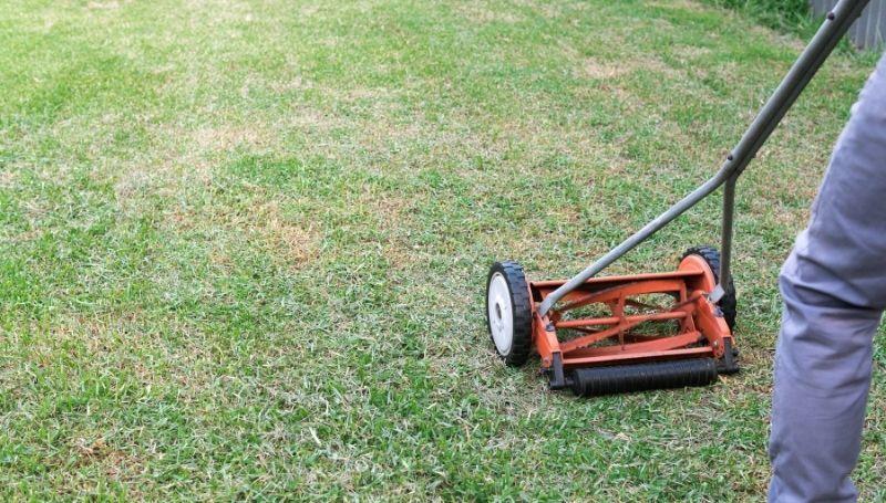 a 2-wheel reel mower cutting 1/3 tall grass
