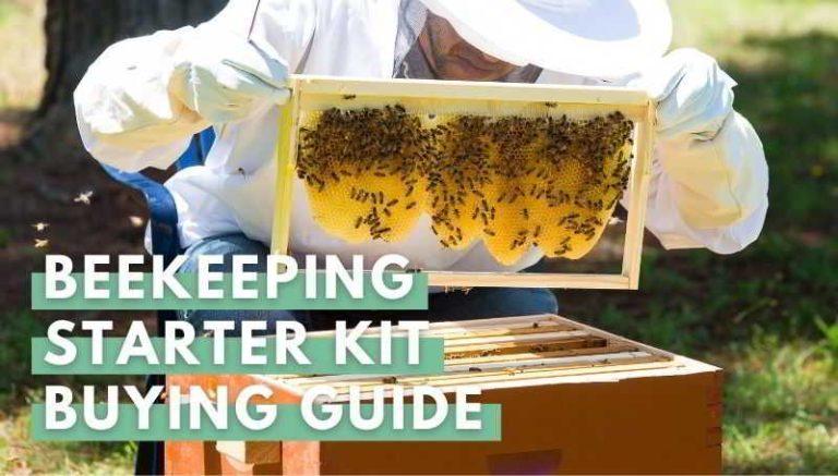 Beekeeping Starter Kit Buying Guide