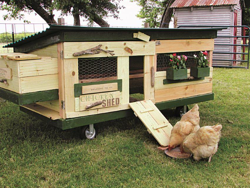 stylish chicken shed