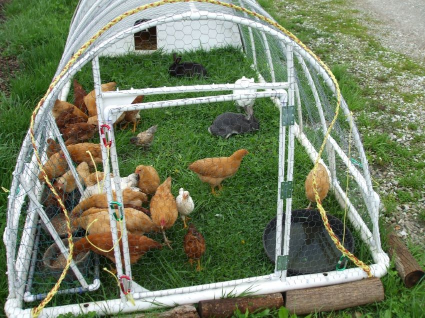chicken tractor from pvc